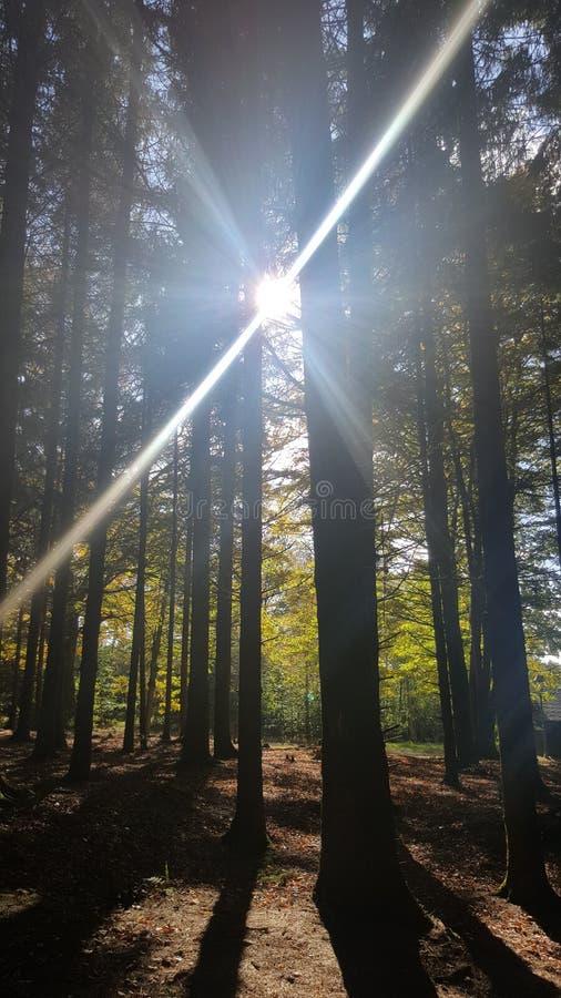 Sol en el bosque fotos de archivo libres de regalías