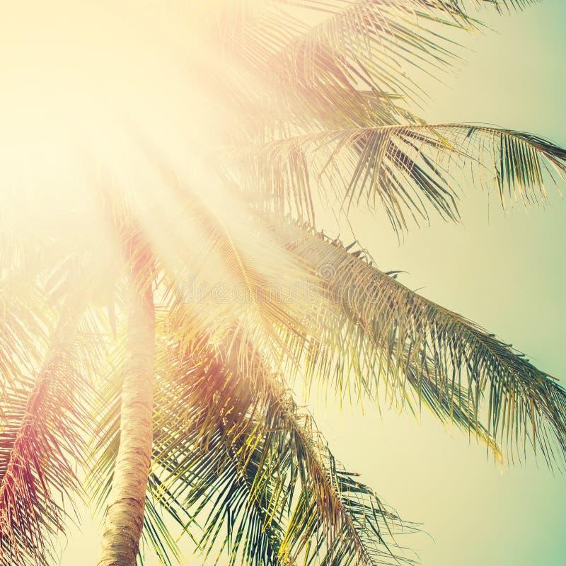 Sol en palmera Concepto de la aventura del viaje del día de fiesta vendimia imagenes de archivo