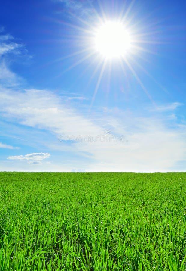 Sol, himmel och grönt fält royaltyfri bild