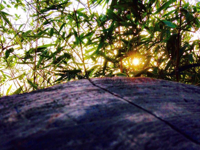 Sol i buskarna arkivfoto
