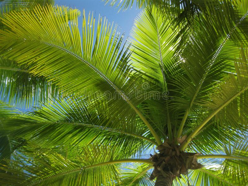 Sol i palmträd i en paradisö royaltyfri foto