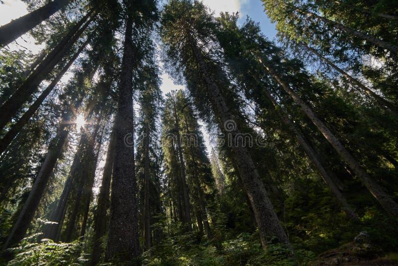 Sol i trä arkivfoton
