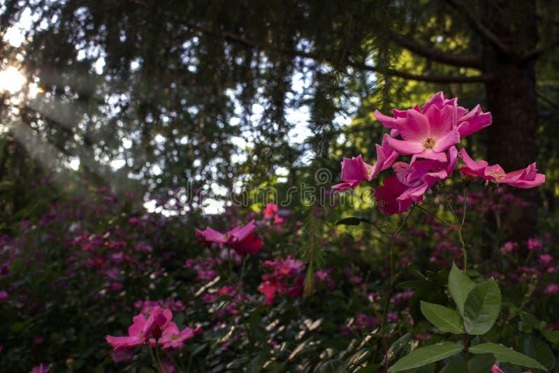Sol kysst blomma arkivfoto