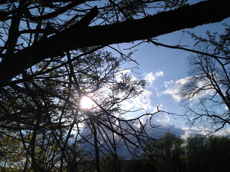 Sol kysst träd arkivfoton