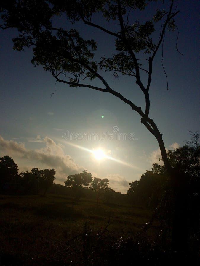 Sol levante di buongiorno fotografie stock libere da diritti