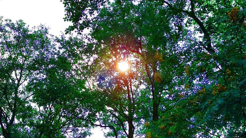Sol luminoso através das árvores de baixo do sol que ilumina belamente imagens de stock