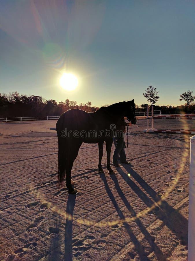 Sol markerad svart skönhet arkivbilder