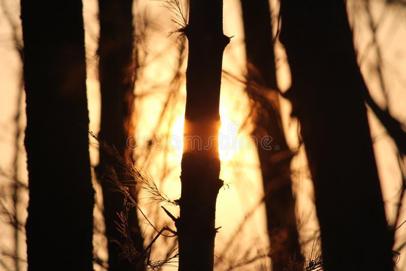 Sol med träd fotografering för bildbyråer