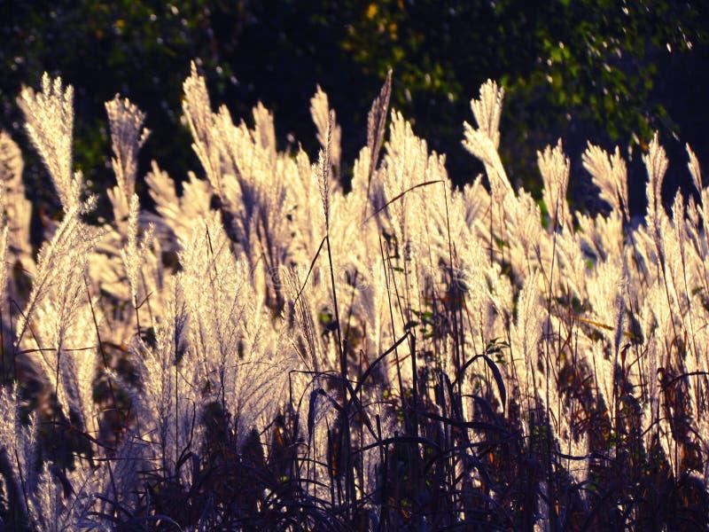 Sol och natur arkivfoton