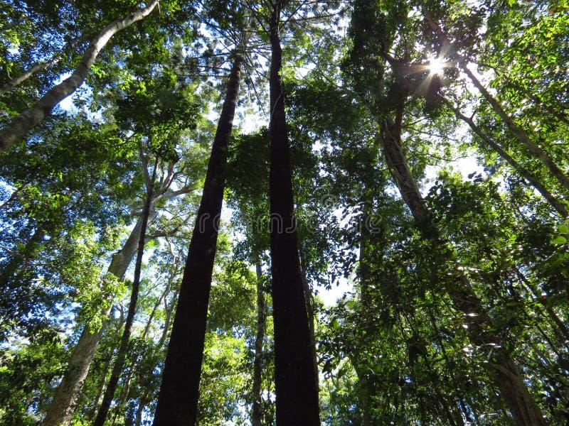 Sol que brilla a través de los árboles fotografía de archivo libre de regalías
