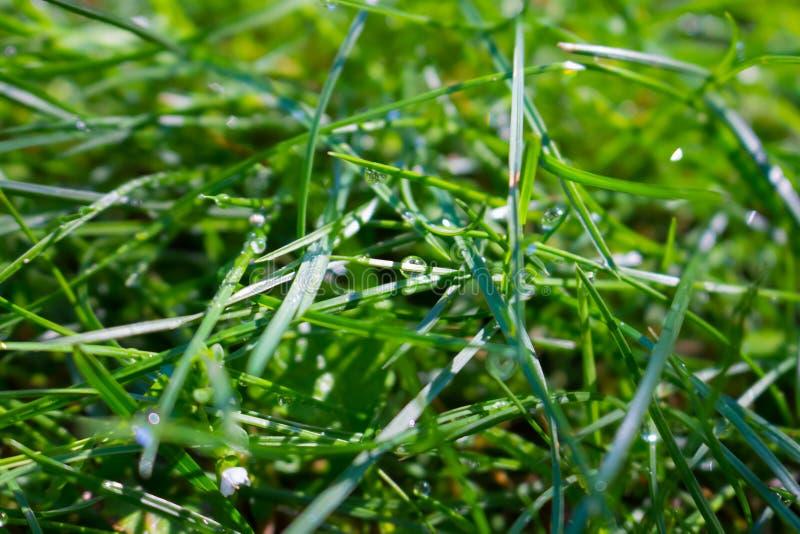 Sol- regndroppar på gräset royaltyfria foton