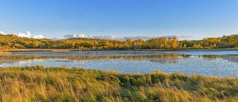 Sol sjö och vit björk i hösten royaltyfri foto