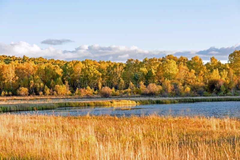 Sol sjö och vit björk i hösten royaltyfria foton