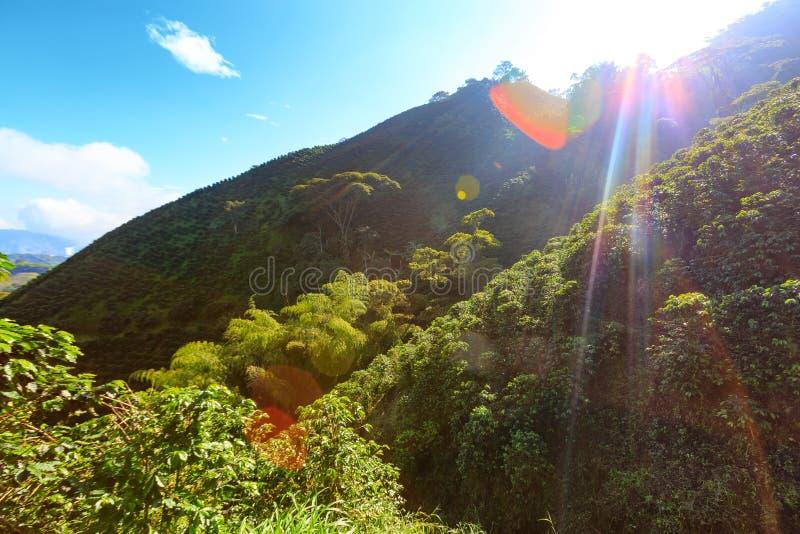 Sol som brists över dolda kullar för kaffe royaltyfri foto