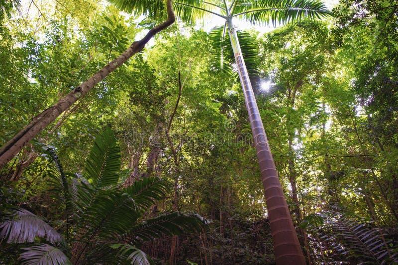 Sol som bryter till och med djungelskog i Tropes royaltyfria foton