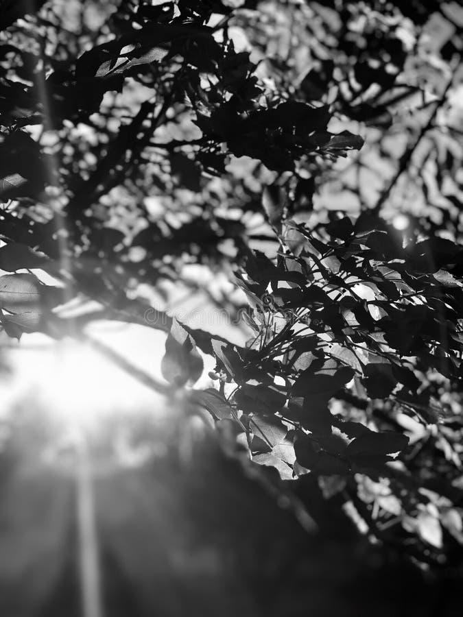 Sol som skiner till och med lövrika filialer arkivbild