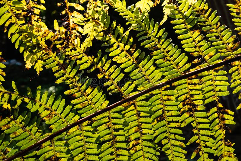 Sol som skiner till och med ormbunkesidor i skogen arkivbilder