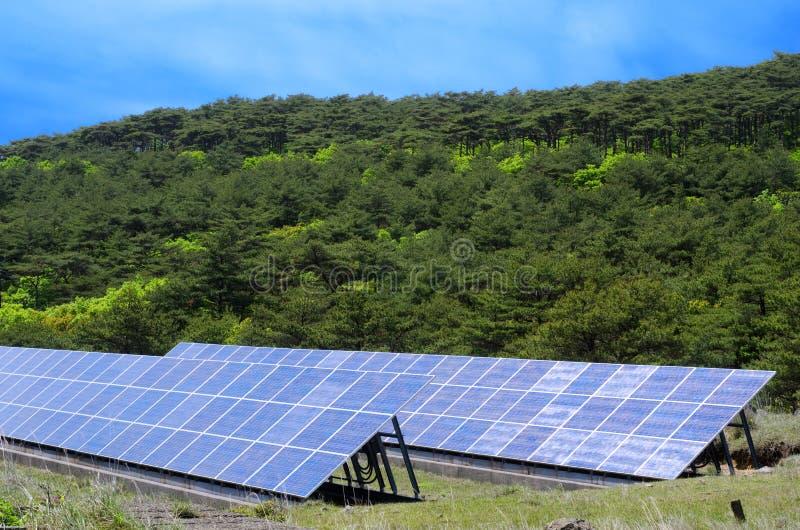 Sol- ström och skog arkivbild