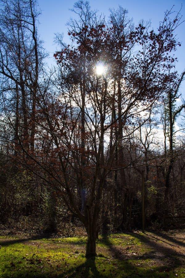 Sol till och med träden royaltyfria foton