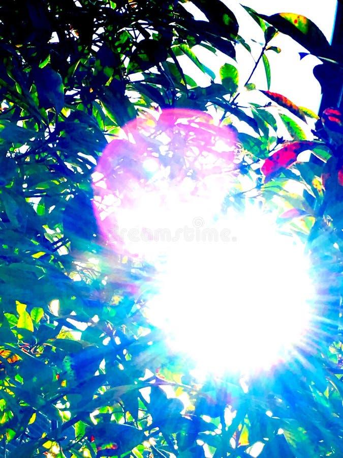 Sol a través de la llamarada de la lente de los árboles fotos de archivo