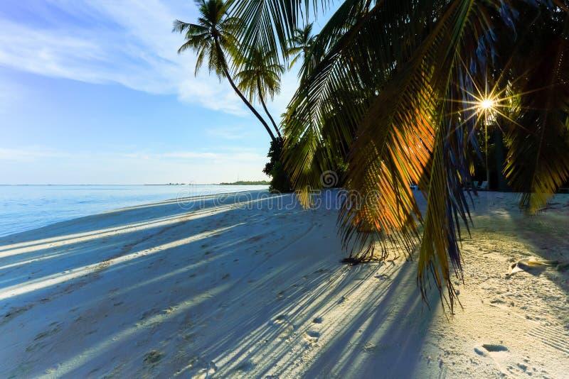 Sol a través de la palmera en la playa fotos de archivo libres de regalías