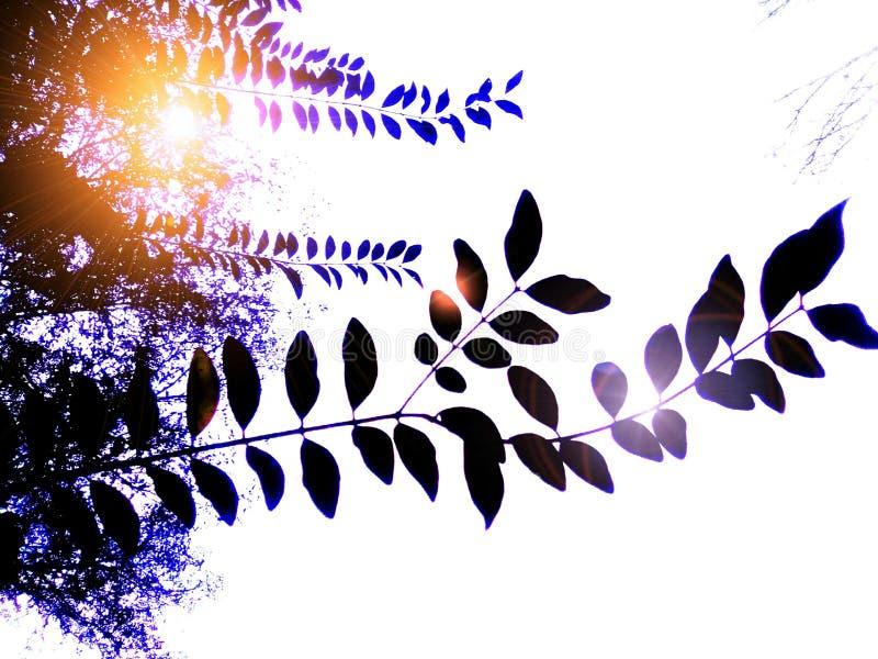 Sol a través de las hojas imagen de archivo