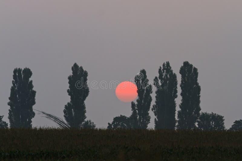 Sol vermelho grande que aumenta atrás das árvores fotografia de stock