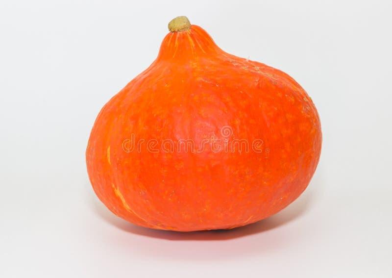 Sola calabaza anaranjada de Hokkaido fotos de archivo