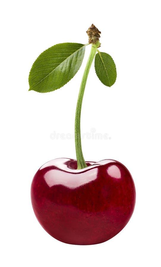 Sola cereza roja aislada en el fondo blanco imagenes de archivo