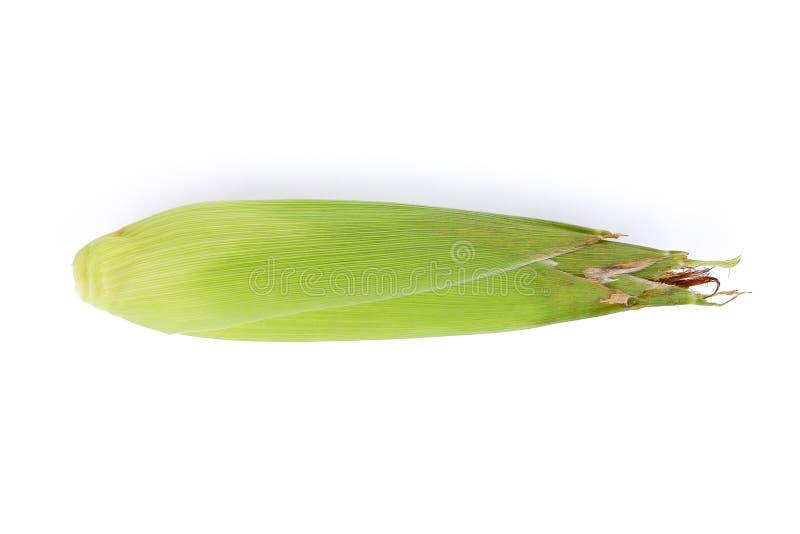 Sola espiga de trigo aislada en el fondo blanco, visión superior foto de archivo