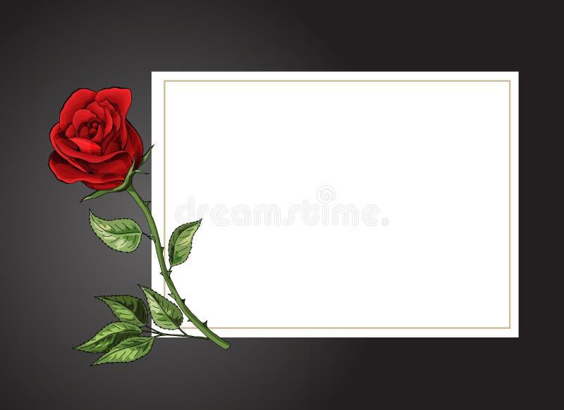 Sola flor de Rose en el fondo blanco con la plantilla negra del vector de la frontera stock de ilustración