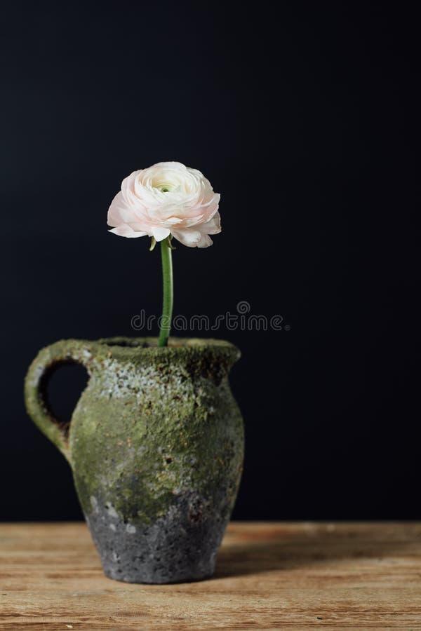 Sola flor rosada apacible del ranúnculo en un florero del vintage en una tabla de madera imágenes de archivo libres de regalías
