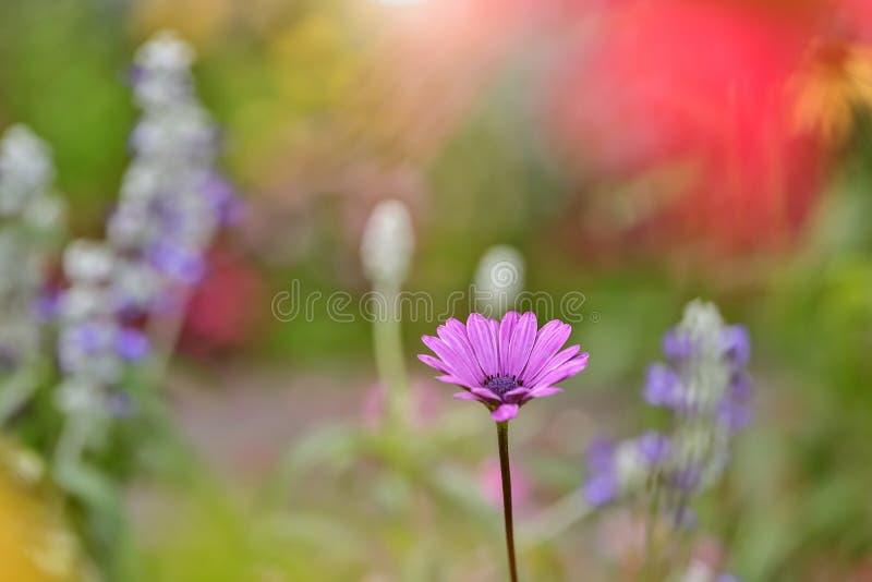 Sola flor rosada que coge el sol en un jardín enorme imagen de archivo