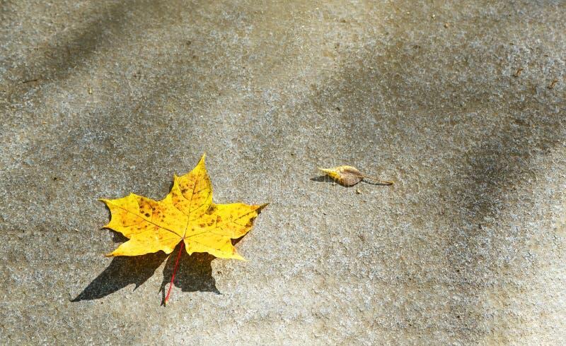 Sola hoja amarilla del otoño del arce en el fondo de tierra de la textura de la piedra del granito Imagen abstracta de la natural imágenes de archivo libres de regalías