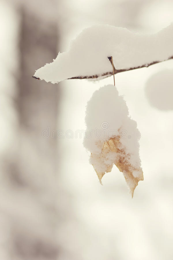 Sola hoja nevada imagen de archivo