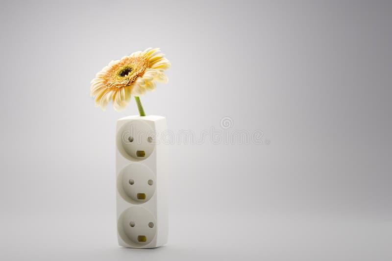 Sola margarita amarilla del Gerbera en un florero foto de archivo