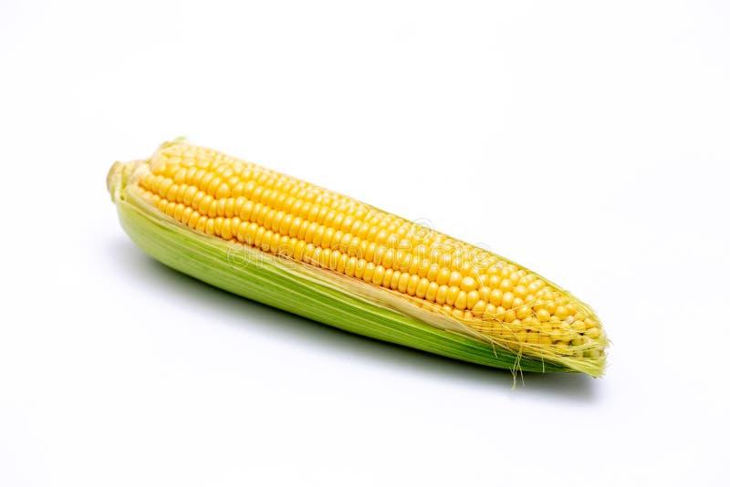 Sola mazorca de maíz aislada en el fondo blanco imagen de archivo