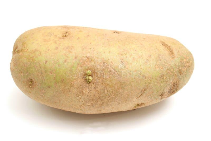 Sola patata en blanco fotos de archivo