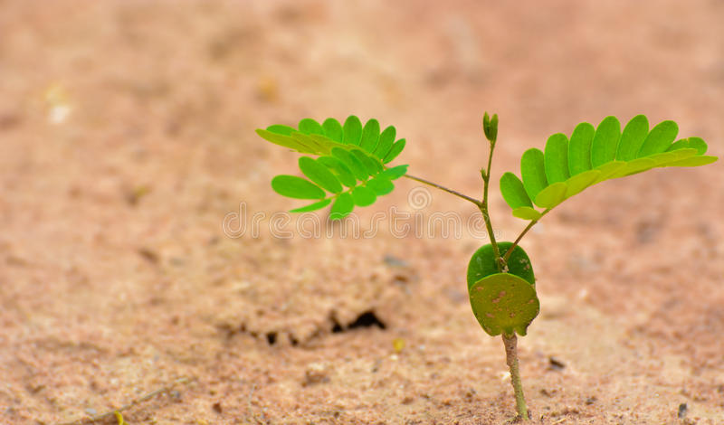 Sola planta verde en el desierto imagen de archivo libre de regalías