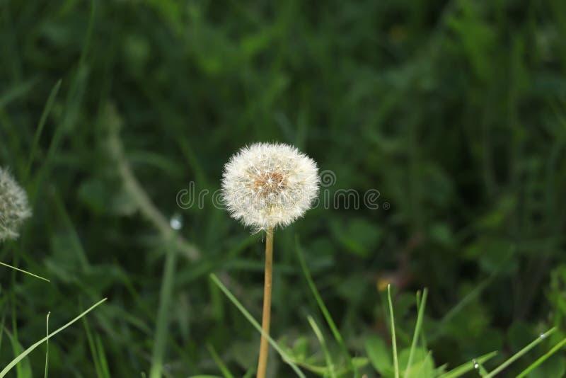 Sola różnego kwiatu makro- strzał obrazy royalty free