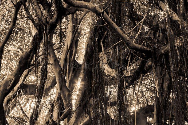 Sola selva del color del detalle con asolear el relámpago imagen de archivo libre de regalías
