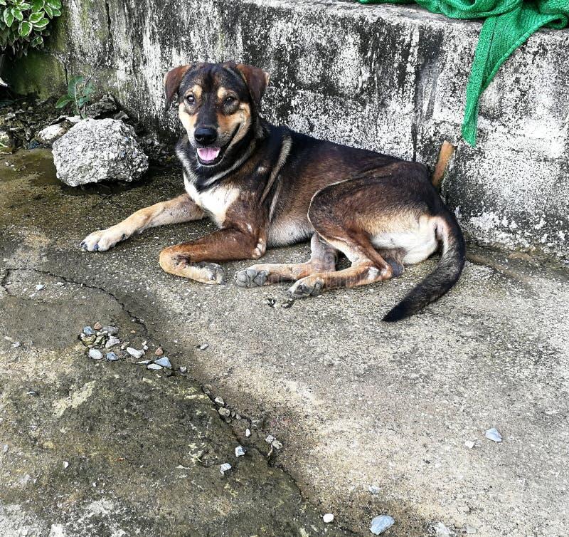 Solamente el perro sin hogar pobre coloca en la tierra concreta sucia imagen de archivo libre de regalías
