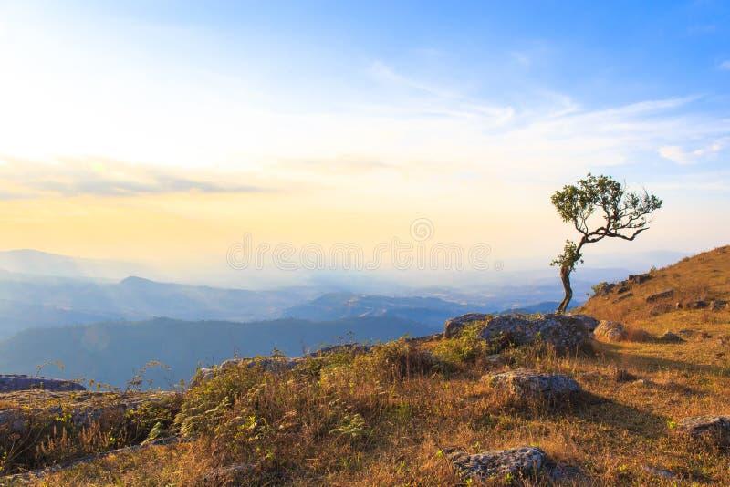Solamente o solo un árbol en el acantilado de la colina de la montaña en el bosque en la puesta del sol o el tiempo de la igualac foto de archivo libre de regalías