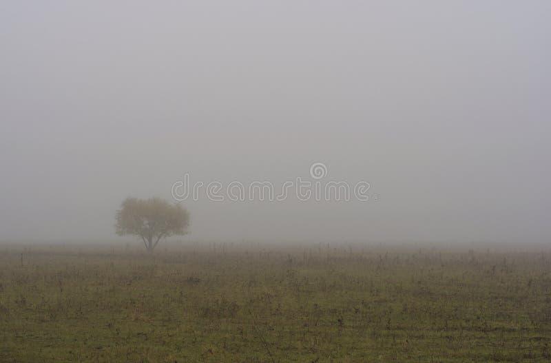 solamente un árbol imagenes de archivo