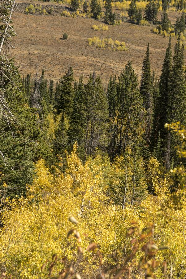 Solankowa Rzeczna przepustki Lander granica Wyoming zdjęcia stock