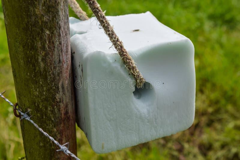 Solankowego liźnięcia kamień fotografia stock