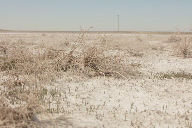 Solankowi bagna zamiast wysuszonego Aral morza Kazachstan, 2019 obraz stock