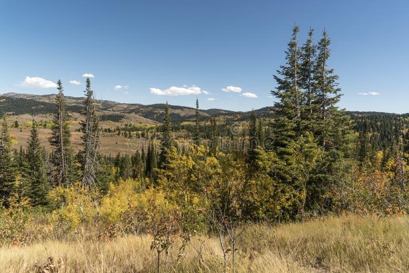 Solankowy Rzeczny przepustki Lander Odcina Wyoming obraz stock