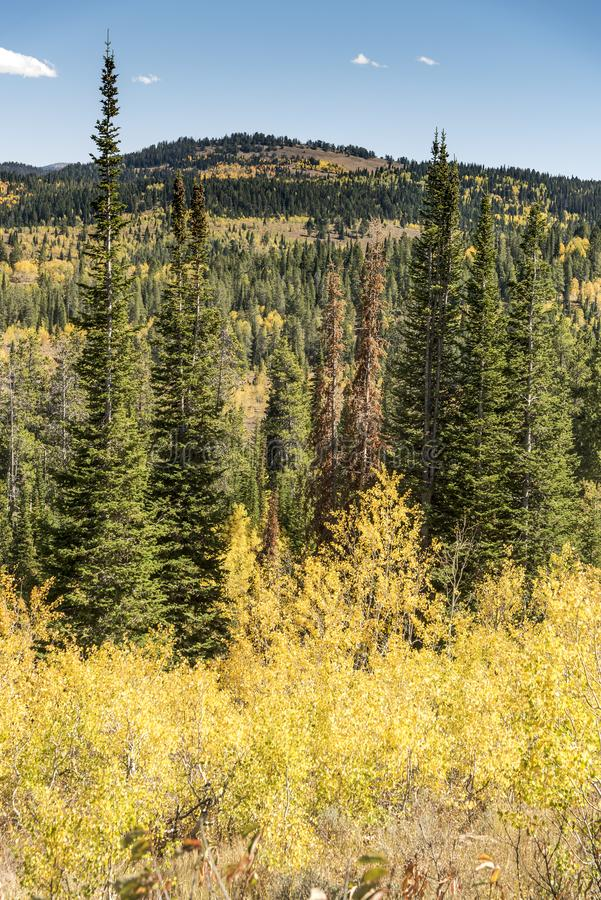 Solankowy Rzeczny przepustki Lander Odcina Wyoming fotografia royalty free
