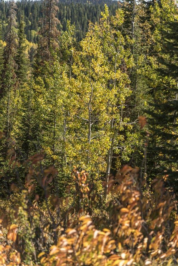 Solankowy Rzeczny przepustki Lander Odcina Wyoming zdjęcia stock